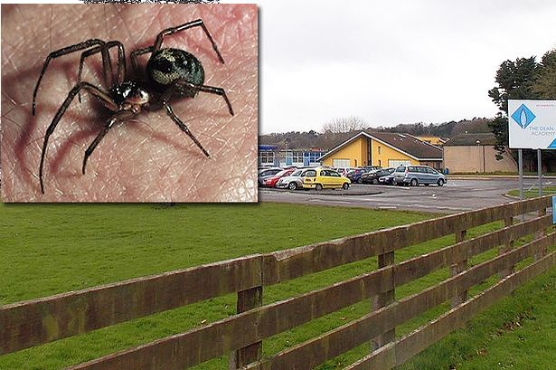 Dziennik Sky News poinformował wczoraj, że plaga pająka fałszywej czarnej wdowy, przyczyniła się do zamknięcia jednej ze szkół w Wielkiej Brytanii.