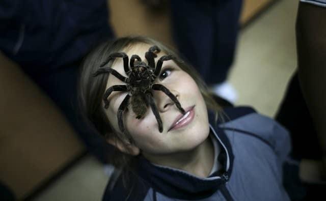 Pająki w domu jak się ich pozbyć 7 sposobów na walkę z pająkami w domu